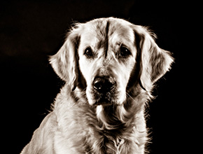 pet-photographer-sussex