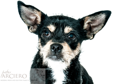 Pet Photography in Brighton and Hove