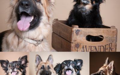 Fabulous Pet Portraits