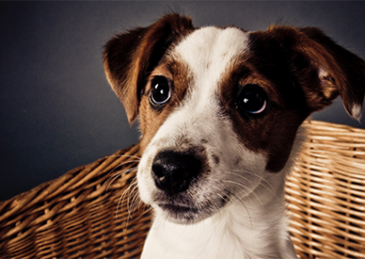 pet photography in sussex